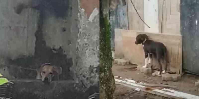 Moradores denunciam situação grave de maus-tratos a animais em Bertioga, SP