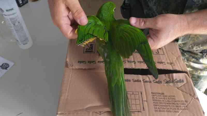Mulher é multada por cortar asas de periquito em Buri, SP