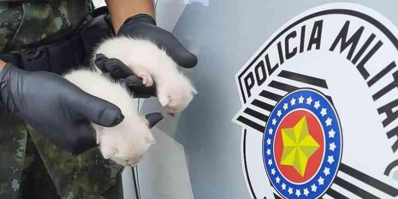 Gatos em situação de maus-tatos são resgatados de casa em Caraguatatuba, SP; animais estão doentes