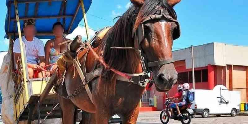 Guarujá (SP) proíbe condução de animais presos a veículos; multa pode chegar a R$ 6 mil