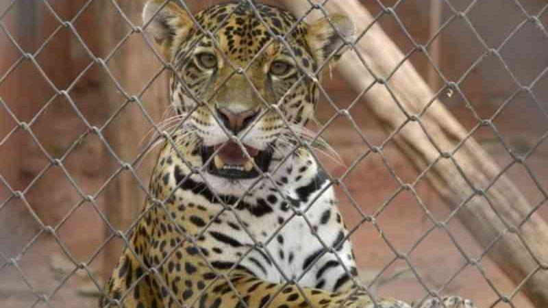 Alunos de Jundiaí (SP) podem observar animais da Mata Ciliar em tempo real