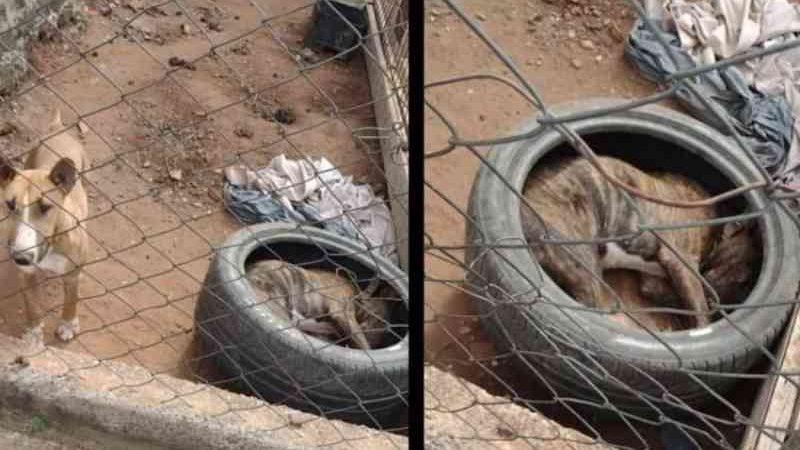Moradores denunciam situação de maus-tratos com cães no Jardim do Lago, em Limeira, SP