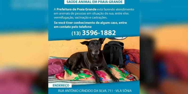 Cães de moradores de rua terão atendimento veterinário em Praia Grande, SP