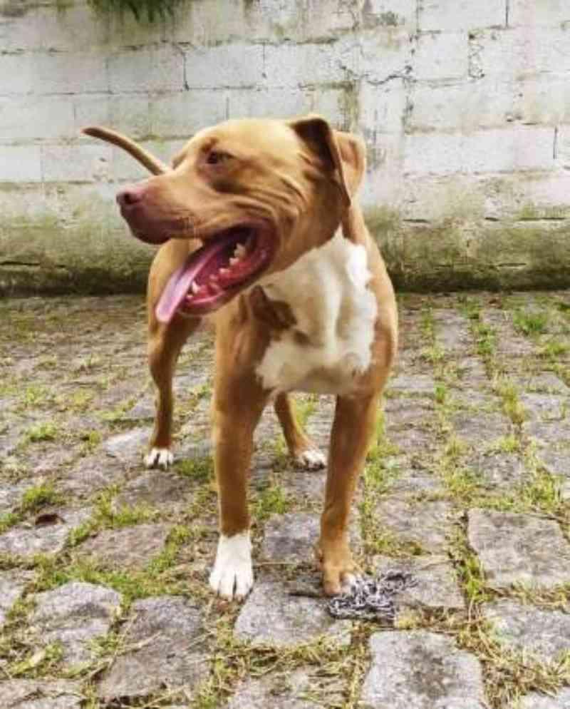 Cão que sofreria 'eutanásia' é resgatado após campanha em Ribeirão Pires, SP