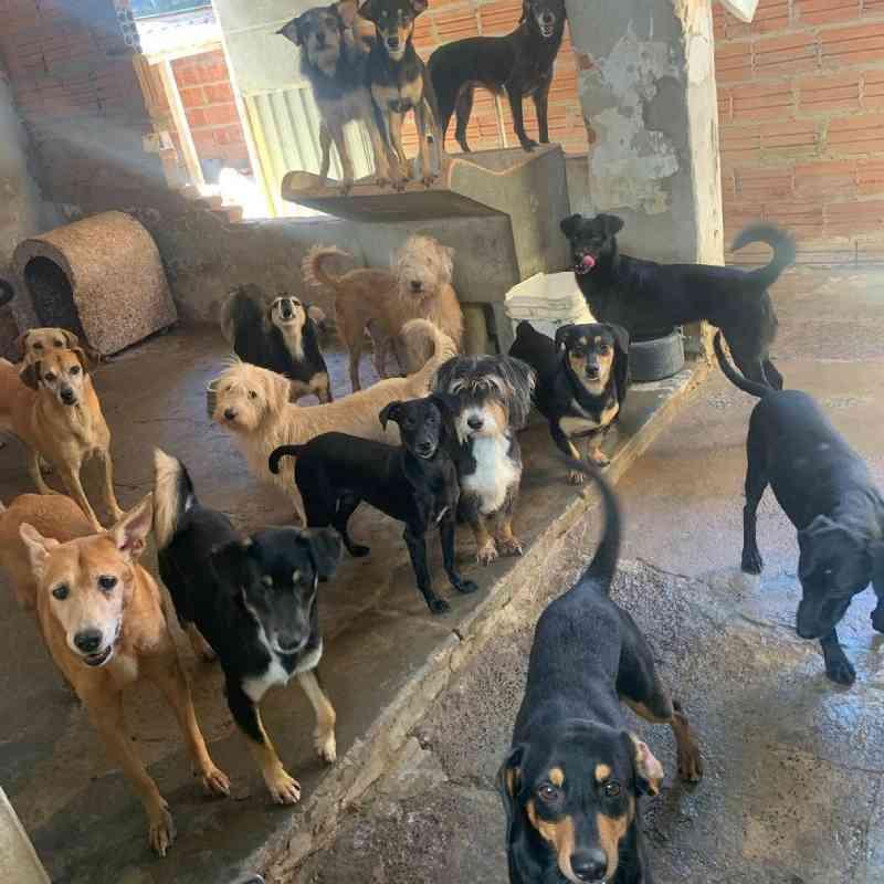 Mais de 50 cachorros ficam sem lar em Rio Claro (SP) após tutores morrerem de Covid-19