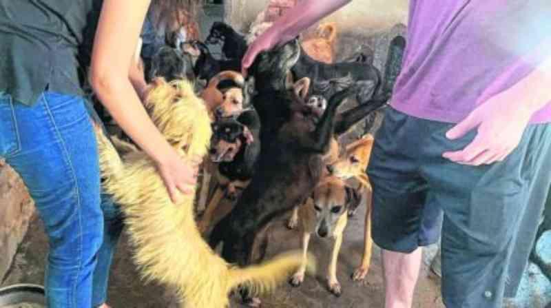 Grupo faz apelo para população adotar 53 cães de ex-protetora que faleceu, em Rio Claro, SP
