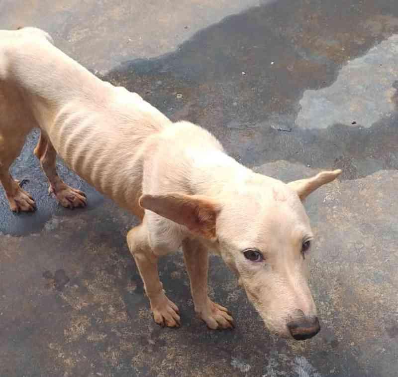 Morador de Rosana (SP) leva multa de R$ 3 mil por maus-tratos a cachorro em residência