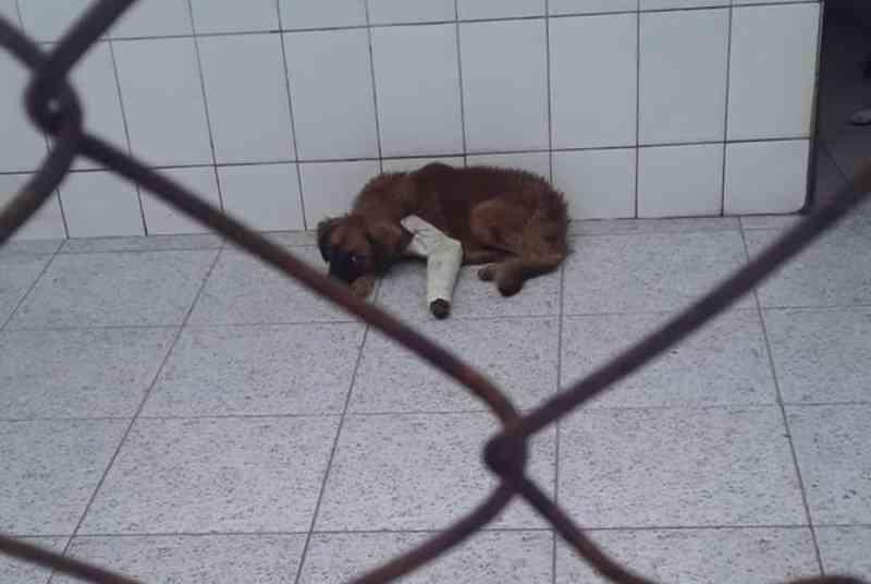 Protetores animais denunciam falta de estrutura na Zoonoses de São Vicente, SP