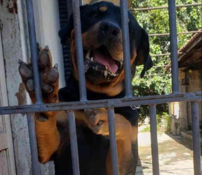 Amigos procuram nova família para cachorro que ficou órfão ao perder tutor para a Covid-19