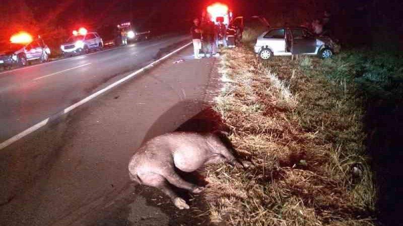 Anta morre após ser atropelada por carro na Rodovia General Euclides de Oliveira Figueiredo, em SP