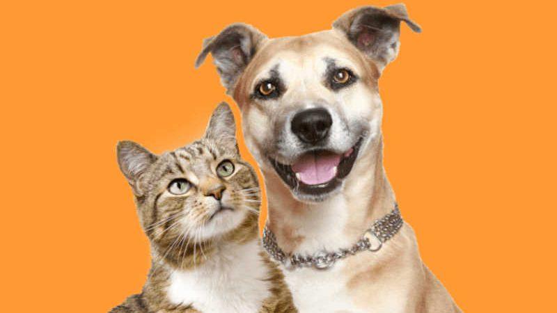 Cadastro para castração gratuita de cães e gatos pode ser feito pela internet em Bragança Paulista, SP
