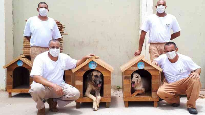 Casinhas de madeira feitas por detentos abrigam cães abandonados em SP: 'A gente faz de coração'