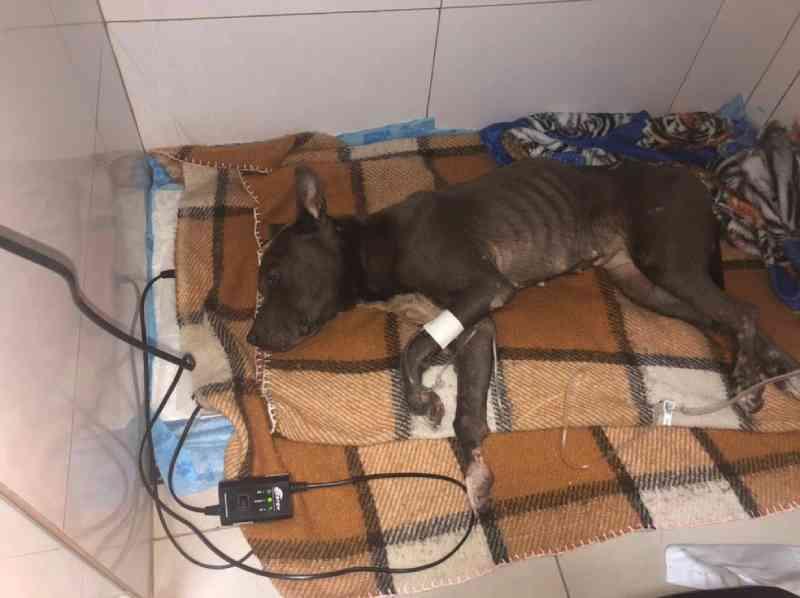Cachorra é resgatada do lixo e luta para viver no litoral de SP: 'Deixada para morrer'