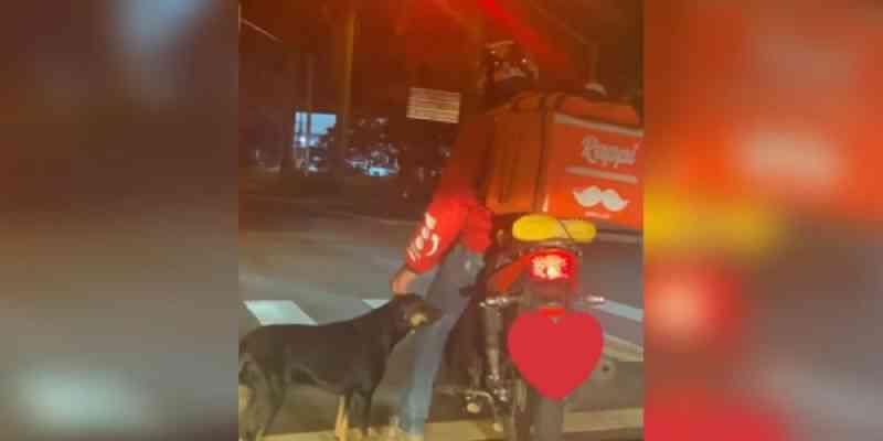Motoboy afaga cachorro enquanto espera semáforo e viraliza na internet; entenda a história