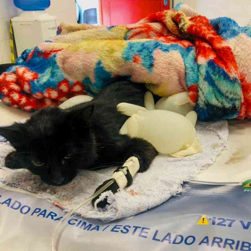 Equipe do Programa Saúde animal resgata gato vítima de maus-tratos no Polvilho, em Cajamar, SP