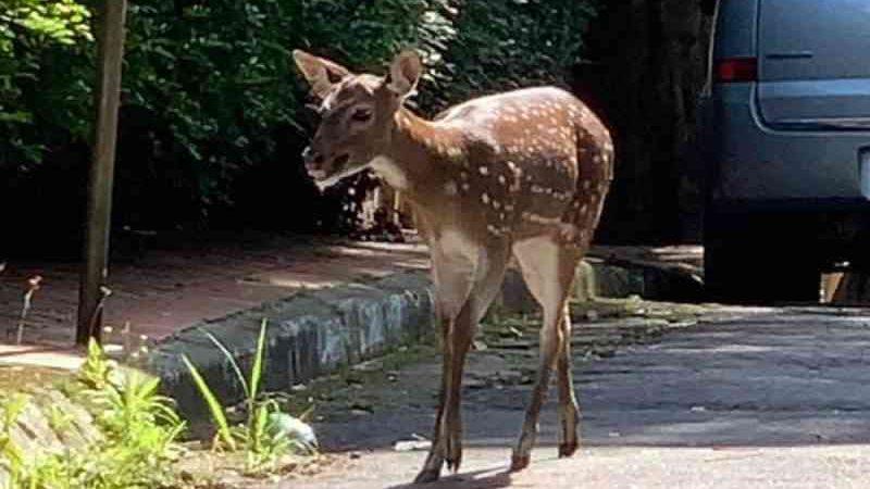 Protetora de animais diz ter sido agredida enquanto tentava resgatar cervo na zona sul de SP