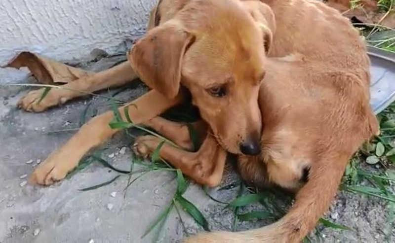 Mulher é multada por suspeita de manter cachorro em situação de maus-tratos em Sorocaba, SP; vídeo