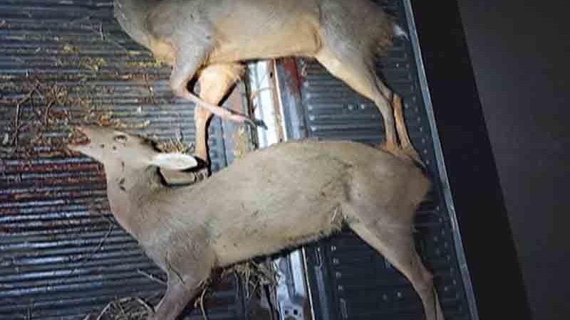Homem é preso com animais silvestres, armas e munição em Palmas, TO