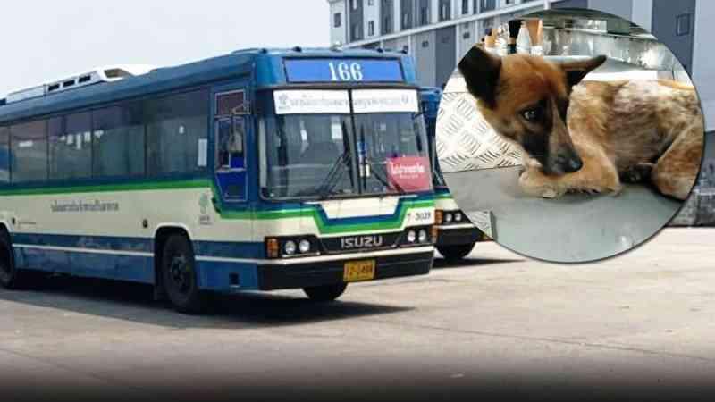 Motorista de ônibus elogiado após resgatar da rodovia um cachorro exausto