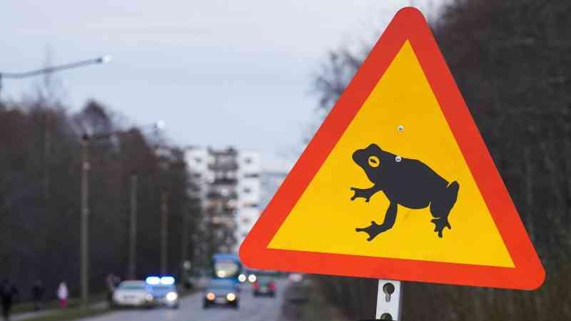 Talin fecha estrada para que sapos e rãs possam atravessar em segurança