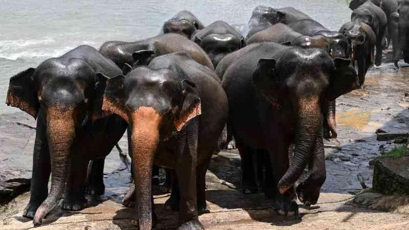 Zimbábue vende direito de caça a elefantes e 500 podem ser mortos
