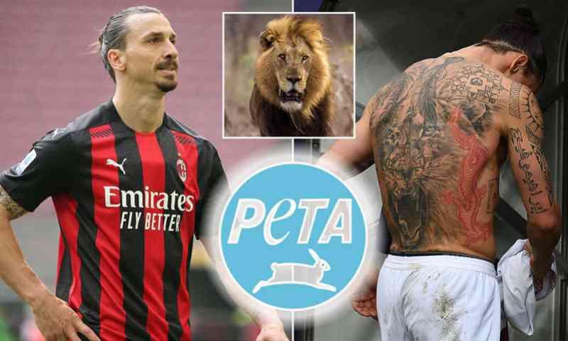 Jogador de futebol Ibrahimovic é um 'covarde miserável', disse PETA sobre atleta ter atirado em leão cativo