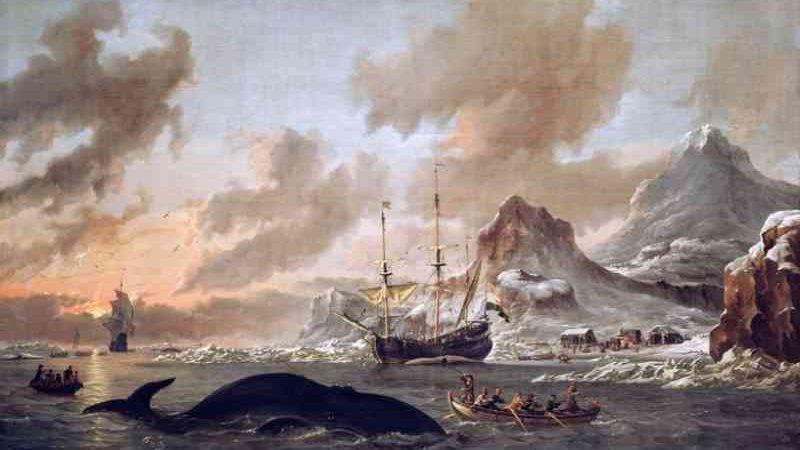 Cachalotes avisavam-se uns aos outros sobre caçadores no século XIX