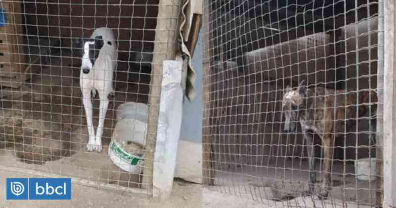 35 cães usados em caçadas são resgatados em condições precárias, estressados e com sinais de maus-tratos