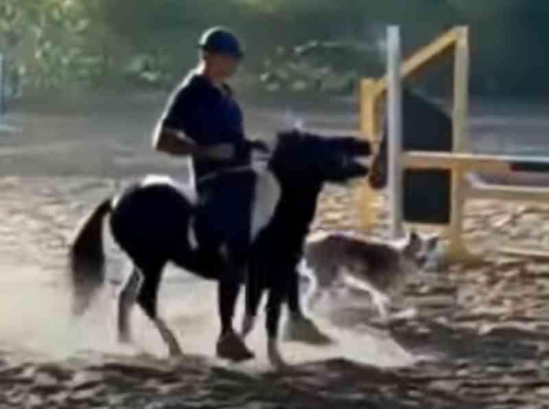 Cavaleiro da seleção brasileira é suspenso por três anos por maus-tratos aos animais