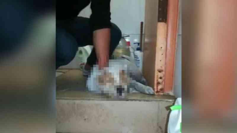 Crueldade! Homem mata cachorro com socos na cabeça