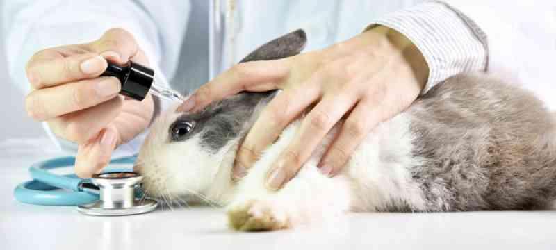Microchip com tecido humano pode acabar com testes em animais