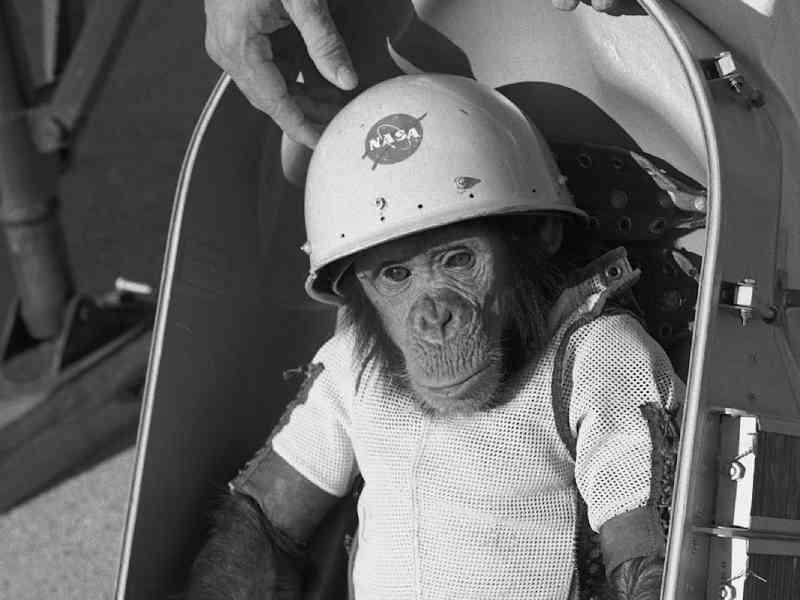 A longa e controversa história da NASA com experimentação animal