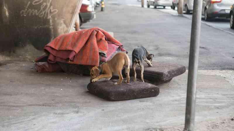 Em 1º turno, ALMG aprova garantia de água e comida para animais de rua