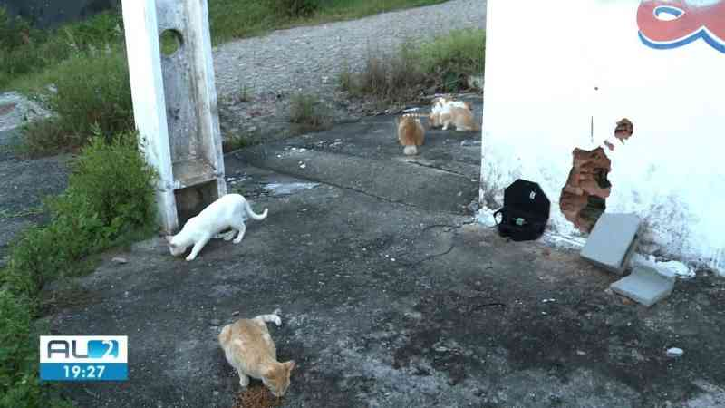 Polícia investiga morte de dezenas de gatos nos bairros do Pinheiro e Bebedouro, em Maceió, AL