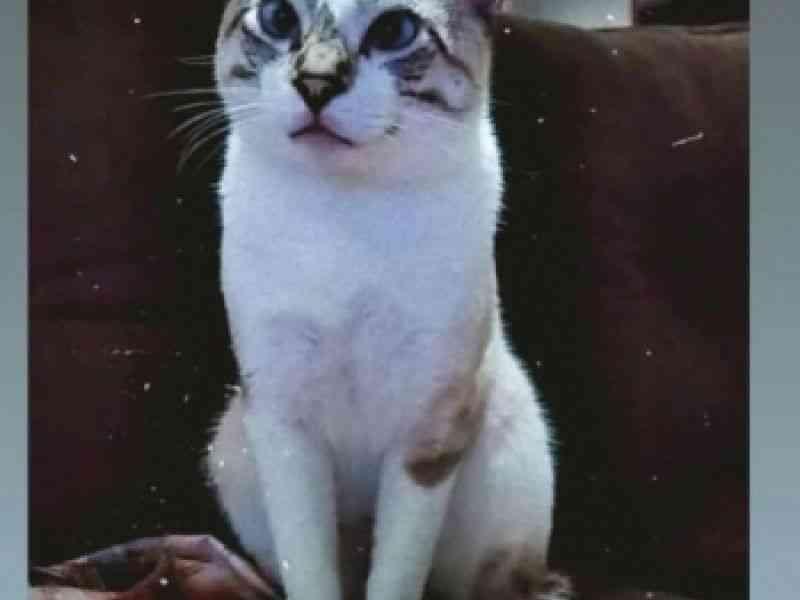 Mais oito gatos são envenenados no Alto São João, em Penedo (AL) moradores estão indignados