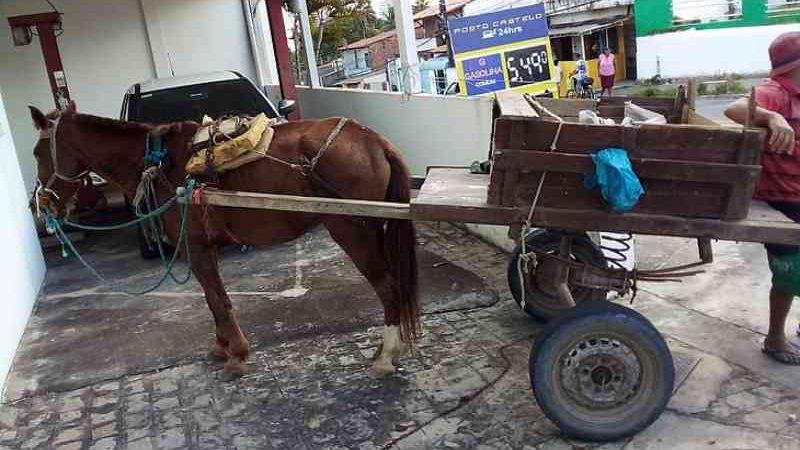 Jovem de 19 anos é preso por maus-tratos a um cavalo no Jacintinho, em Maceió, AL