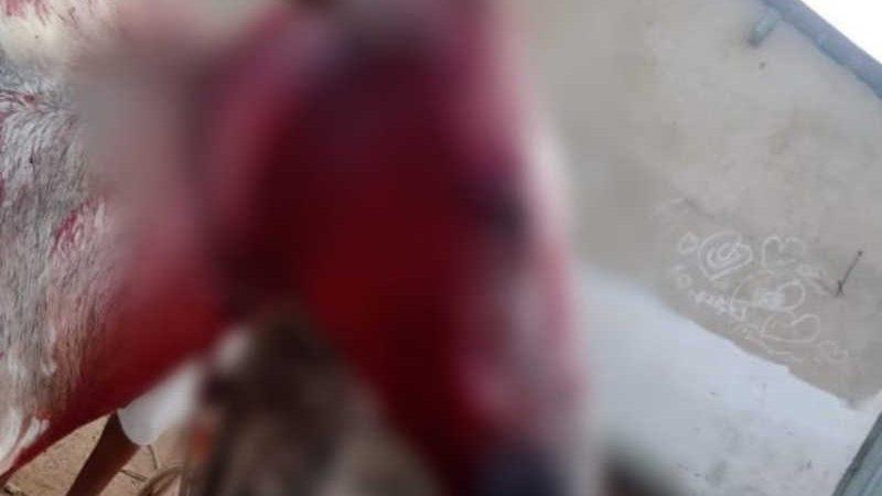Animal foi encontrado ensanguentado em Marechal Deodoro, com corte de facão na cabeça — Foto: Arquivo pessoal