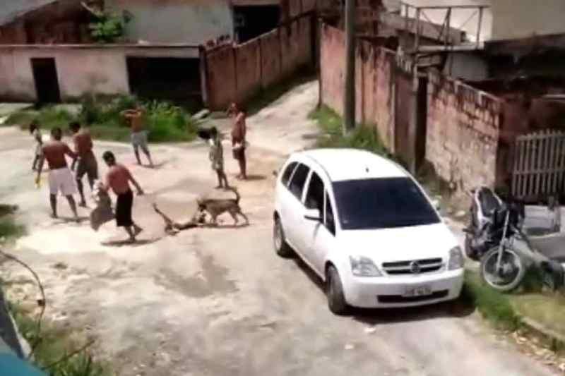 Cachorro arrastado em rua de conjunto em Manaus (AM) é resgatado por ativista; veja vídeo