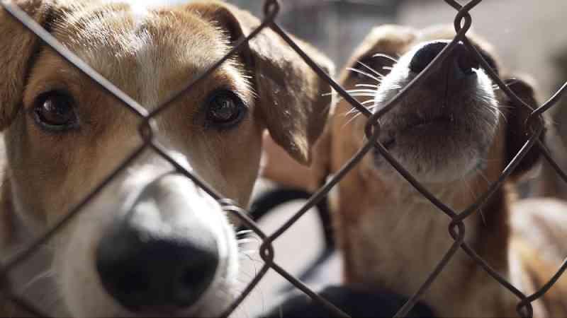 Macapá (AP) registra quase 70 casos de violência animal nos 4 primeiros meses de 2021