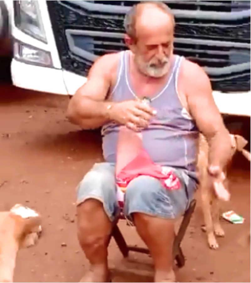 Caminhoneiro parou viagem para alimentar cães FAMINTOS na estrada