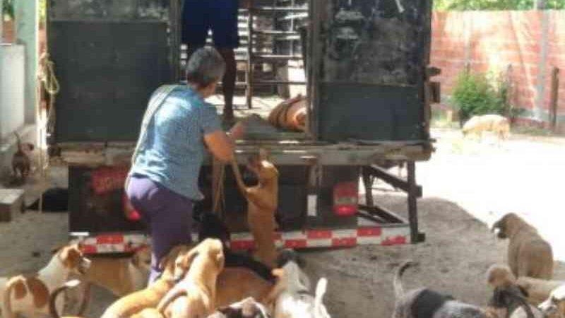Associação com mais de 460 animais sofre com falta de ração e alojamentos em Simões Filho, BA