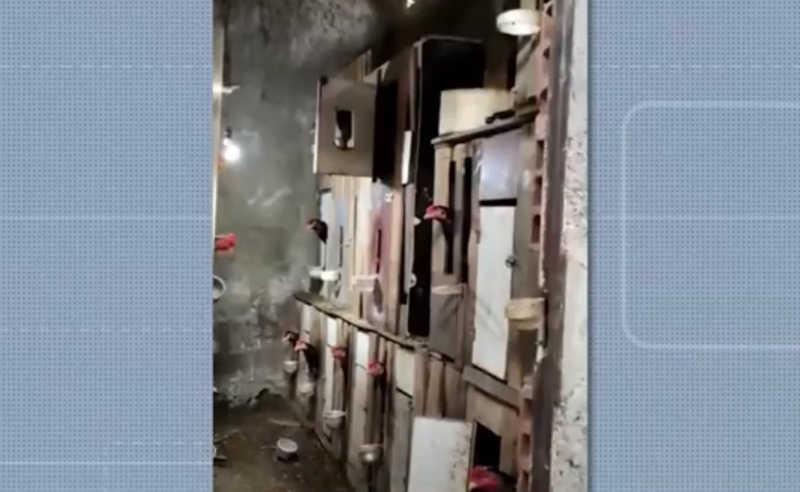 Homem é preso suspeito de promover rinha de galo em Barra do Choça. 20 animais foram resgatados. — Foto: Reprodução/TV Sudoeste