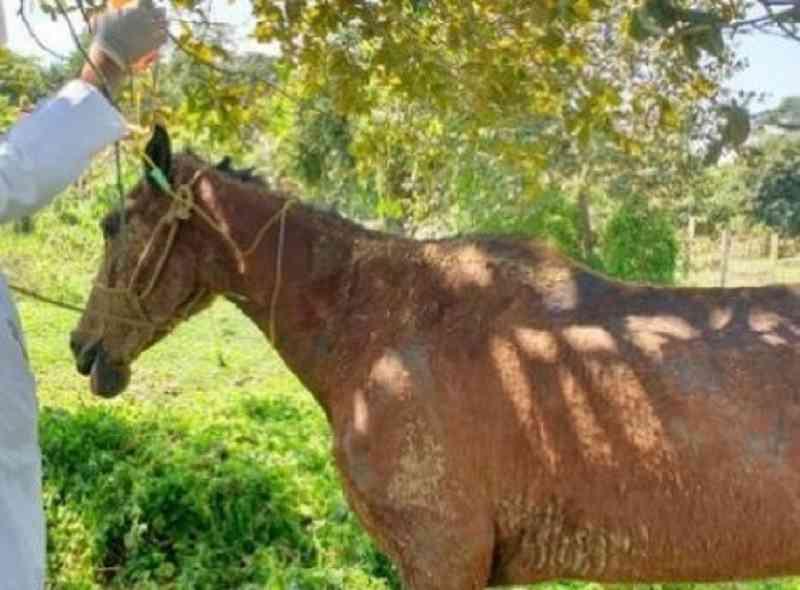 Comerciante é denunciado por arrastar égua amarrada pela boca a um carro na Bahia