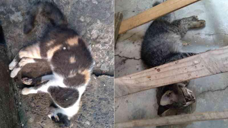 Treze gatos são achados mortos no Centro de Abastecimento de Mata de São João (BA) suspeita é de envenenamento