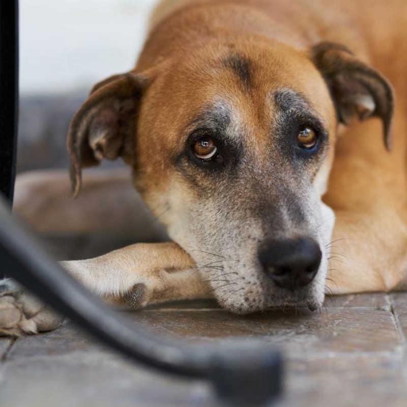 Ilhéus (BA) é acionado pelo MP para construir abrigo a animais vítimas de maus-tratos