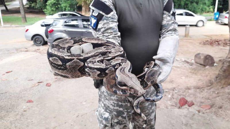 Mais de 350 animais são resgatados em cerca de cinco meses em Salvador — Foto: Ascom/GCM