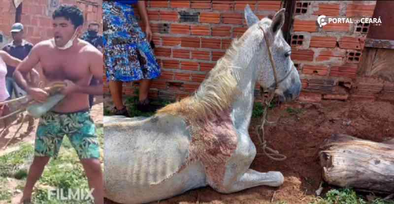 Cavalo vítima de maus-tratos em Juazeiro do Norte (CE) é resgatado com ajuda da PM: veja imagens