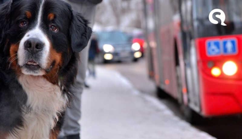 Circulação de cães e gatos está permitida em toda a rede de transporte coletivo no Ceará