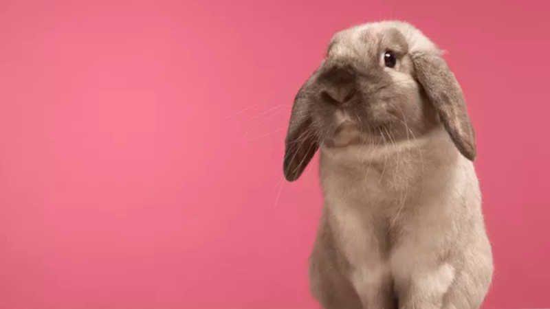 China acaba com a obrigatoriedade de testes em animais (Foto: Getty Images)