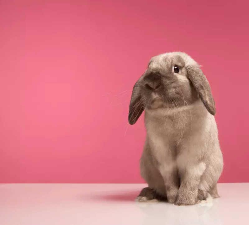 Entra em vigor fim da obrigatoriedade de testes de cosméticos em animais na China
